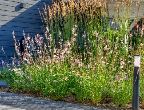 Onderhoud: uw tuin in juni