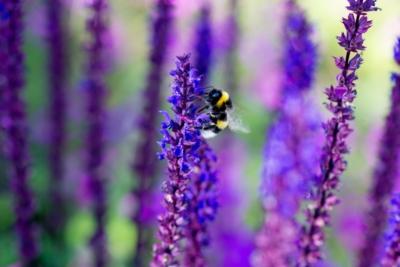 Een goed tuinontwerp duurzame tuin Allure Tuinen Den Haag1