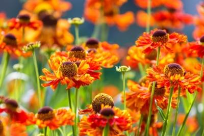 Een goed tuinontwerp duurzame tuin Allure Tuinen Den Haag2